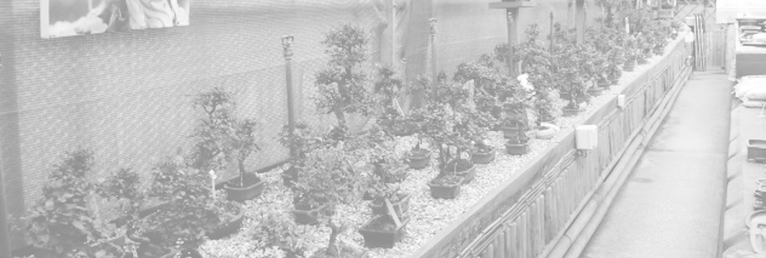 all things bonsai mini banner 2