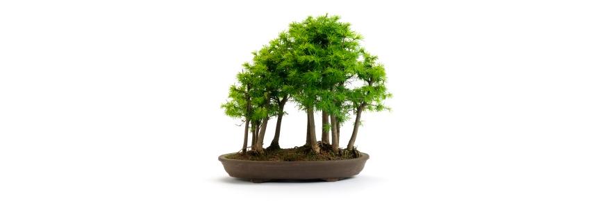 all things bonsai mini banner 3