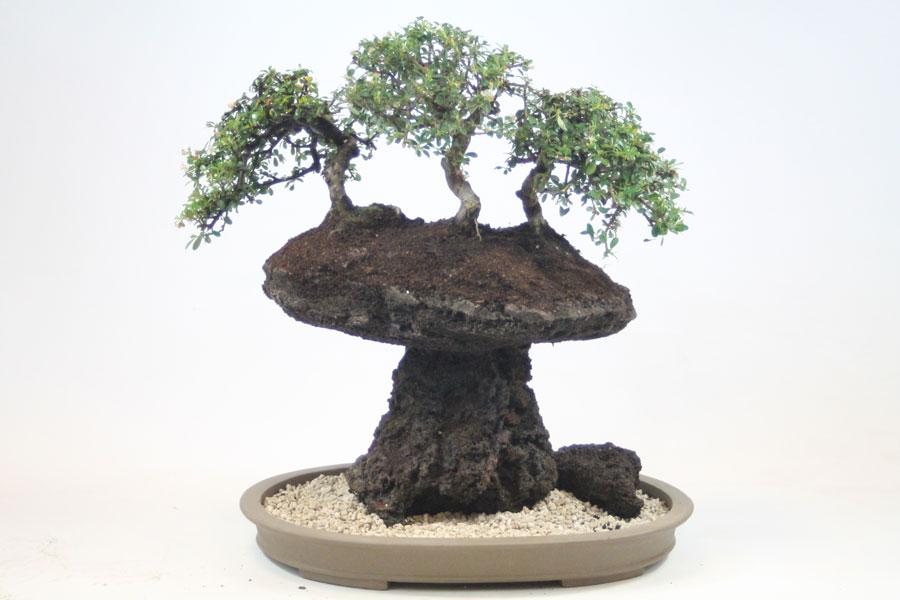 Landscape Supply Co >> Bonsai Classes & Workshops - ALL THINGS BONSAI