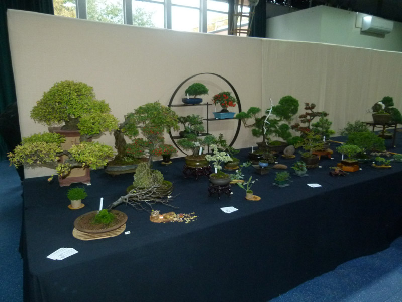 Bonsai Display Stand In Action All Things Bonsai