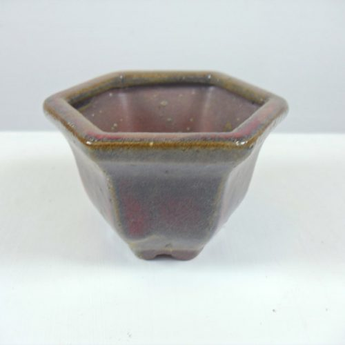 mame small bonsai tree pot red hexagon from all things bonsai sheffield yorkshire