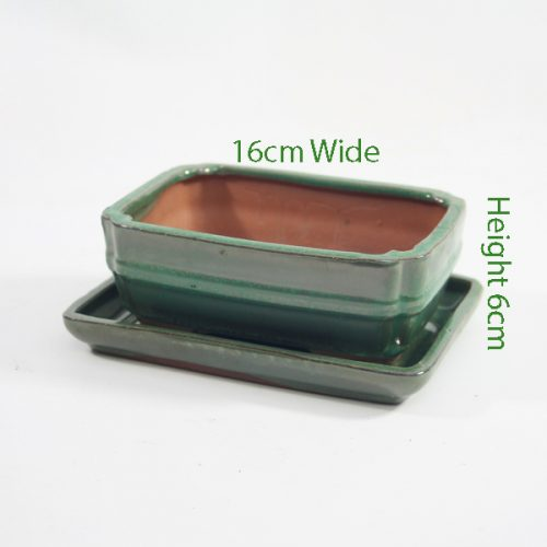 6 Inch Green Rectangular Glazed Bonsai Pot With Matching Tray available to buy online from All Things Bonsai Sheffield Yorkshire with free UK delivery
