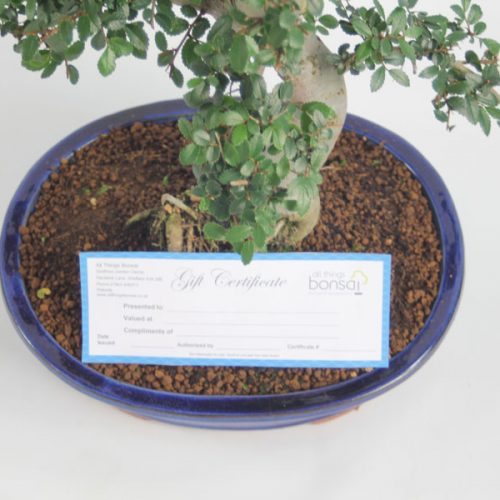 Bonsai Tree Gift Certificate from All Things Bonsai Sheffield Yorkshire