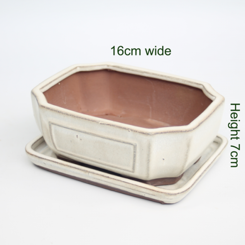 6 Inch Cream Rectangular Glazed Bonsai Pot With Matching Tray available online from All Things Bonsai Sheffield Yorkshire