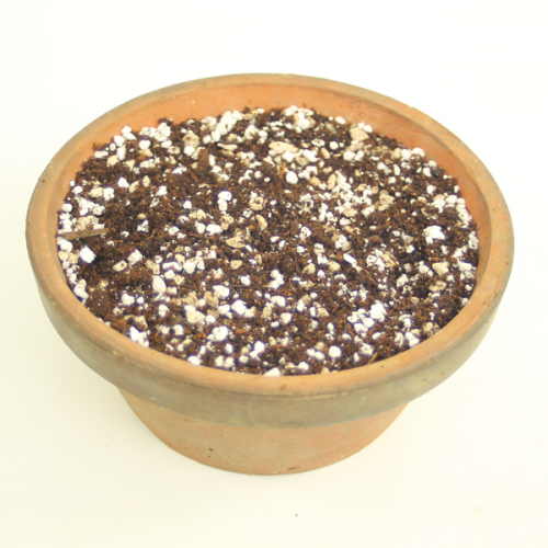 Indoor Bonsai Tree Soil Mix available to buy online from All Things Bonsai Sheffield Yorkshire with free UK delivery
