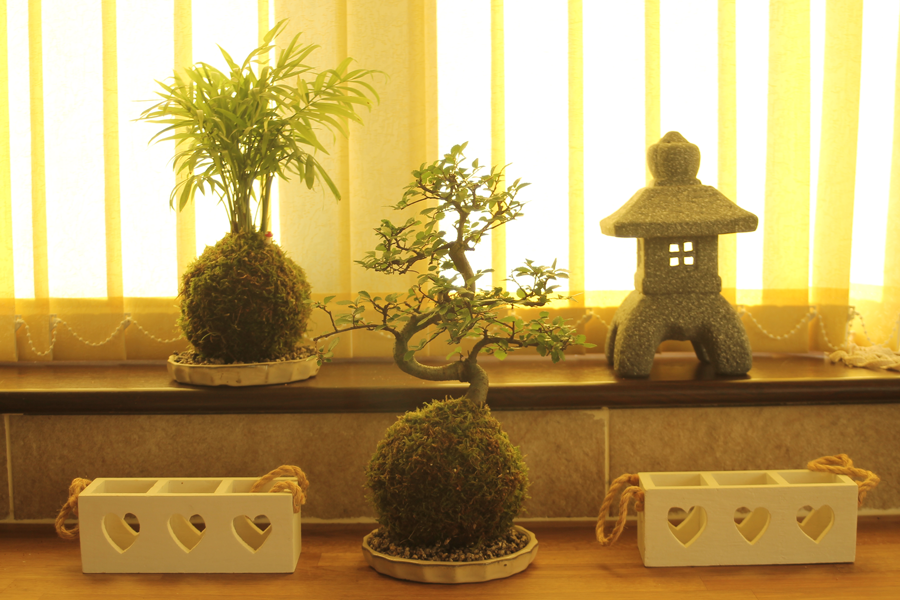 Kokedama Bonsai Trees at All Things Bonsai Sheffield Yorkshire available to buy online with free UK delivery