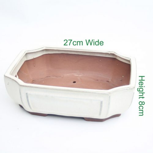 Bonsai Tree Pot cream glazed rectangle available to buy online from All Things Bonsai Sheffield Yorkshire with free UK delivery