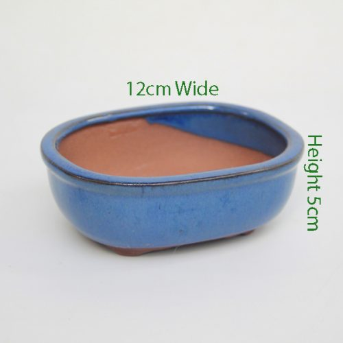 Mame Bonsai Tree Pot Blue Oval available to buy online from All Things Bonsai Sheffield Yorkshire with free UK delivery