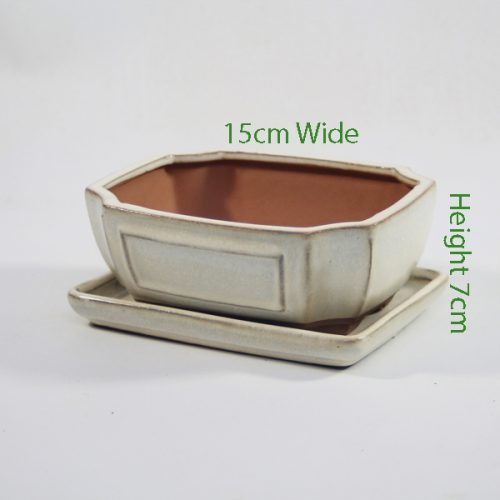 7 Inch Glazed Bonsai Pot With Matching Tray Cream Rectangle available to buy online from all things bonsai Sheffield Yorkshire with free UK delivery