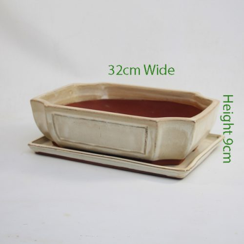 12 Inch Glazed Bonsai Pot And Tray Cream Rectangle available to buy online from All Things Bonsai Sheffield Yorkshire with free UK delivery