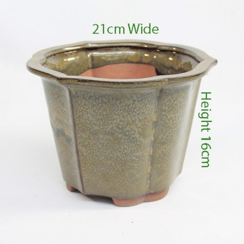 Cascade Bonsai Pot code I20 Large Taupe available to buy online from All Things Bonsai Sheffield Yorkshire with free UK delivery