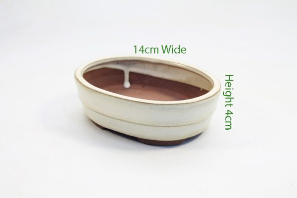6 Inch Glazed Bonsai Pot Cream Oval available to buy online from All Things Bonsai Sheffield Yorkshire with free UK delivery